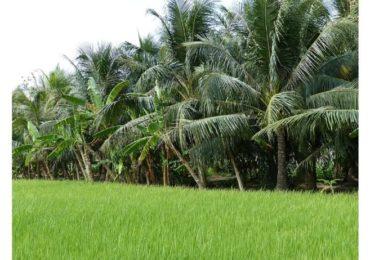 Le Vietnam vers un développement de la gestion de l'eau d'ici 2030