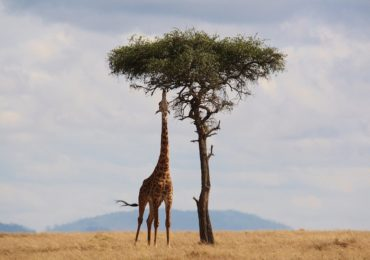 De l'autre côté de l'Afrique