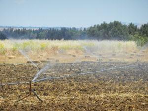 Arrosage de champ céréalier par système d'irrigation sous pression à El-Brahimi, gouvernorat de Jendouba