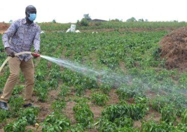 RWANDA - de nouvelles pompes solaires pour irriguer 10 hectares de plantations à Ngoma